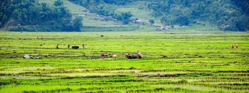三聚环保生物炭新品开发再惠农,爱放牧立夏时节产销忙