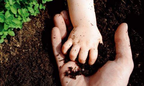 农作物秸秆炭化还田-土壤改良成套产业化技术