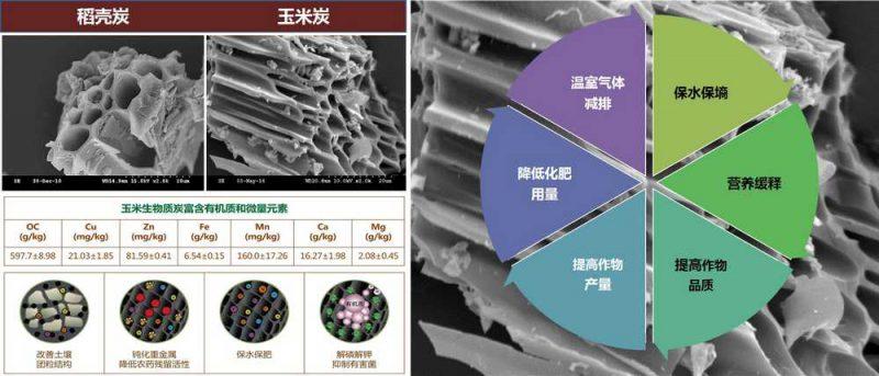 生物质炭微观孔隙结构(扫描电镜图)